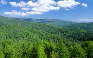 Existe seguro para floresta? Como funciona?
